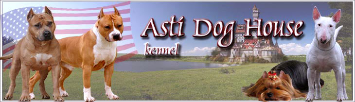 American Staffordshire Terriers from ASTI DOG HOUSE Kennels